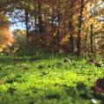 Bosques limpios, energía limpia