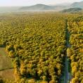 Las cinco amenazas para nuestros bosques